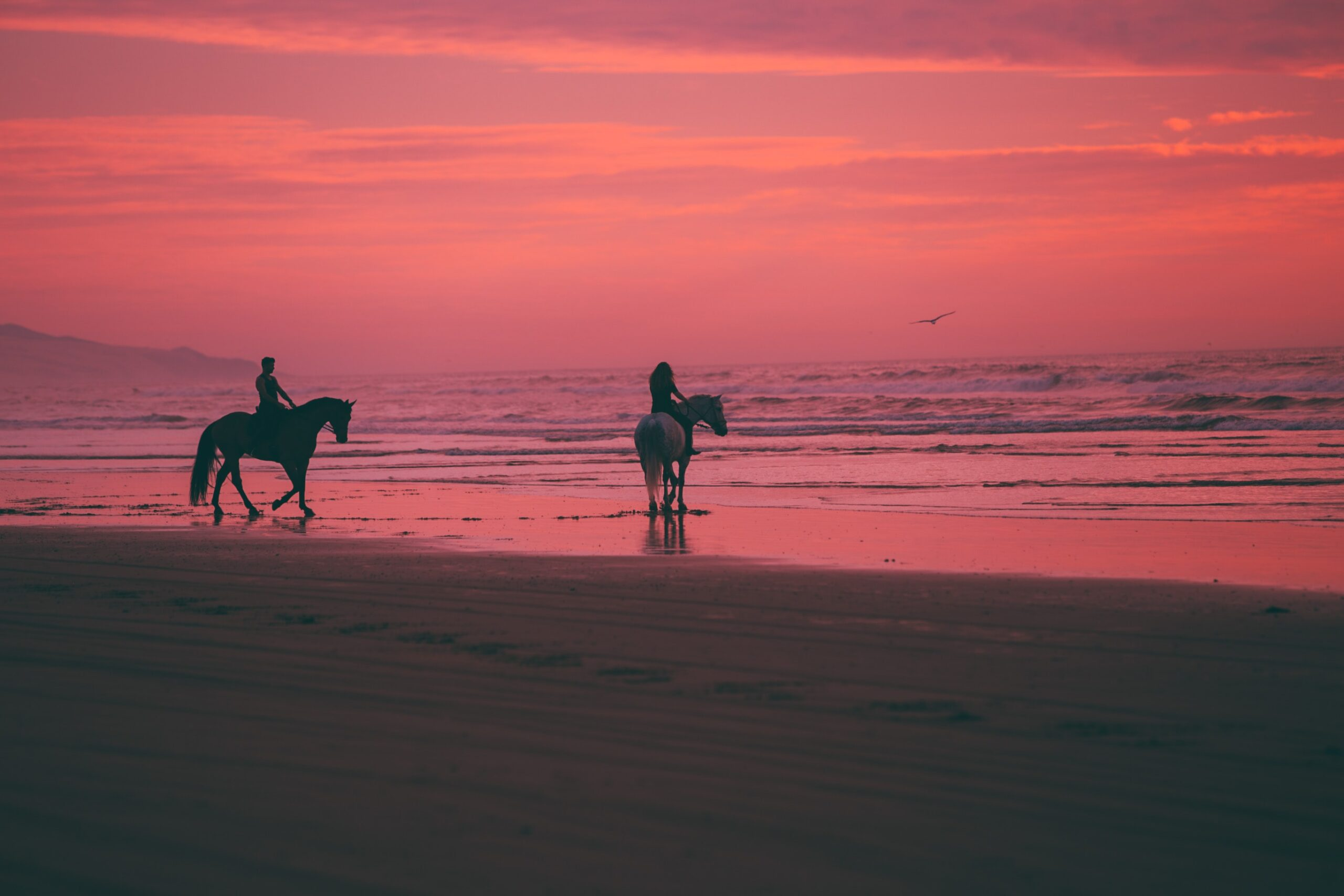 sunset on the beach with horses